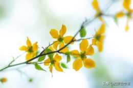 春暖花開不會拍?實用技巧學起來!4個花草拍攝及修圖技巧幫你美