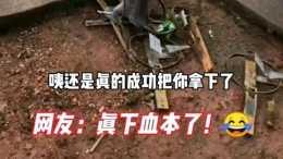 湛江阿姨為了小菜園裡的幾條菜,竟然買幾十個老鼠夾佈滿菜園