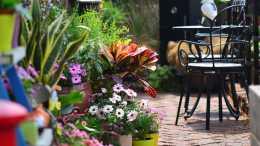 手殘黨福利:不會養花,也能在家裡做出一個小花園