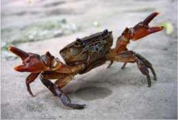家裡吃螃蟹,應該怎麼處理?並不是所有部位都能吃