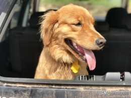 狗狗吃葡萄有哪些危害?狗狗不能吃哪些食物?