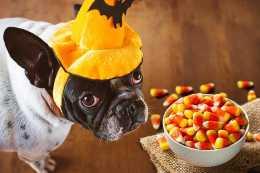 狗狗需要避免食物中毒,有哪些常見的食物,是人能吃狗狗不能吃的