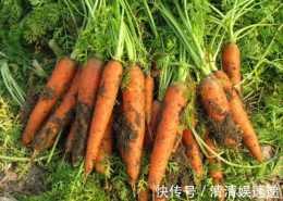 胡蘿蔔與此物一起煮,大肚子變小了,失眠好了,為了健康不妨試試