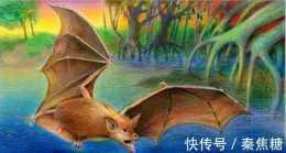 有人說蝙蝠是老鼠演化而來的,這可信嗎?蝙蝠的起源到底是怎樣的