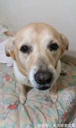 """養了16年的狗狗離世,主人看到汪留下的""""禮物""""後,眼淚止不住了"""