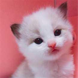 幼貓拉稀不吃飯怎麼辦,小貓拉肚子不吃飯怎麼辦
