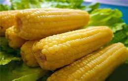 為什麼減肥期間吃玉米可以減肥 玉米和蘋果誰熱量更高